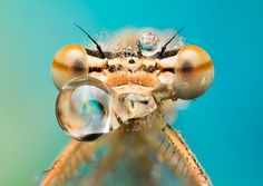 They are all entries for the natural world and wildlife categories in the 2017 Sony World Photography Awards - the world's largest photography competition. World Photography, Photography Awards, Photo Macro, Water Droplets, Rare Photos, Les Oeuvres, Sony, Insects, Wildlife