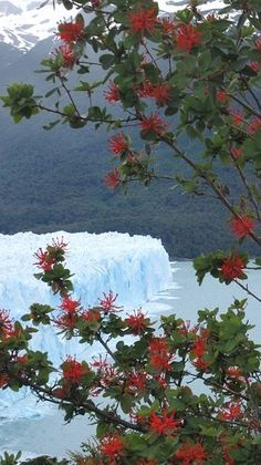 Flowers framed by a glacier in El Calafate, Argentina What A Wonderful World, Beautiful World, Beautiful Places, Ushuaia, Places To Travel, Places To See, World View, South America Travel, Beautiful Landscapes