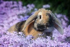#conejos #roedores #mascotas #animales En @tiendanimal nos encanta esta foto www.tiendanimal.com