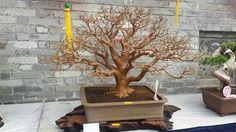 Royal Floria International Bonsai Exhibition & Competition 2016.  Picture of Phong Do Xuang's Facebook feed.  #Bonsai #BonsaiTree #盆栽 #BonsaiLife #Бонсай #BonsaiExhibition #BonsaiMalaysia #BonsaiWork #盆景 #Penjing #Bonsaï