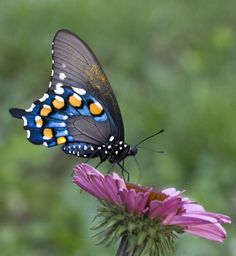 Most Beautiful Butterfly | 20 Most Beautiful Butterfly photographs of the World