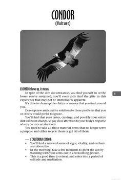 Condor    Animal Spirit Guides: An Easy-To-Use Handbook for Identifying and ... - Steven D. Farmer - Google Books