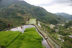 Banaue Rice Terraces, Philippines