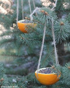 Mangeoire en orange Bird Feeders from Oranges DIY - great winter project with or without children! Unique Bird Feeders, Diy Bird Feeder, Homemade Bird Feeders, Wooden Bird Feeders, Pine Cone Bird Feeder, Outdoor Projects, Diy Projects, Orange Bird, Holiday Crafts For Kids