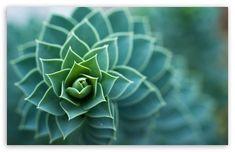 Beautiful Plant wallpaper