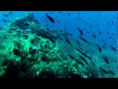 Die unterseeische Welt der Insel Ustica in der Nähe von Sizilien...ein zubestaunendes Paradies...