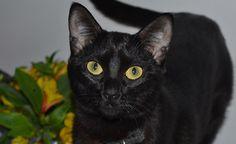 Cats, Animals, Cute Kittens, Gatos, Animales, Animaux, Animal, Cat, Animais