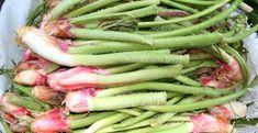 KANSERİ İKİ GÜNDE YOK ETTİ Green Beans, Vegetables, Food, Essen, Vegetable Recipes, Meals, Yemek, Veggies, Eten