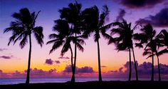 The Dope Surf Society® | palm trees, summer, sunset, tropical, gif, beautiful,