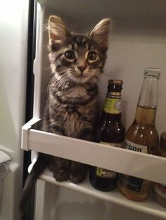 Aw this brings back memories of my teen years - one hot summer's day mum emptied and left the door open on the refrigerator to defrost it only for our then kitten to get inside and fall asleep. Gosh would've been about 23yrs ago now....