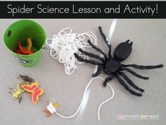 Spider Science and Webs!  A lesson for children to learn about spiders and webs.  Then have an activity spinning their own webs around the insect prey.