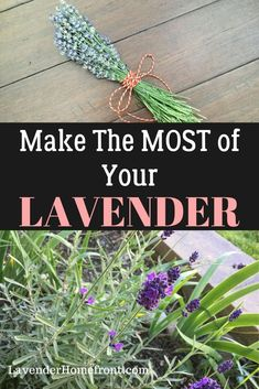 How to prune and harvest your lavender for the best results! Plus an extra recipe on lavender tea bread! Lavender Plant Uses, Lavender Crafts, Dried Lavender Flowers, Growing Lavender, Growing Herbs, Lavander, Edible Garden, Gardening For Beginners, Planting Flowers