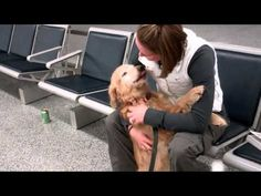MOLLY the dog sees his Mom just home from Afghanistan. This is precious.