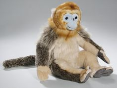 snub nosed monkey - Google Search