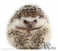 Life on White