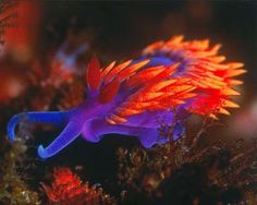 "The name nudibranch comes the Latin nudus, which means ""naked"" and the Greek brankhia, which means ""gills""."