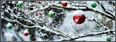 Christmas Ornaments In The Snow HD desktop wallpaper High Facebook Christmas Cover Photos, Winter Facebook Covers, Facebook Cover Photos Vintage, Facebook Cover Photo Template, Cover Pics For Facebook, Timeline Cover Photos, Facebook Timeline, Photo Christmas Tree, Christmas Pictures