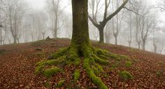 Oskar Zapirain fores-4 Foggy Forests of Ancient Trees Pruned for Charcoal in Basque Country