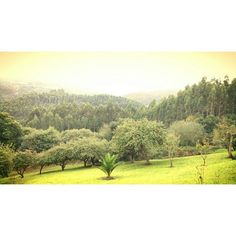 Mi verde #Asturias