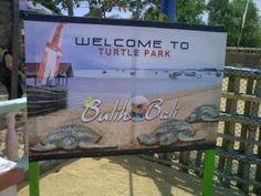 Pariwisata Bali: Lebih Dekat dengan Penyu di Pulau Penyu Tanjung Be...