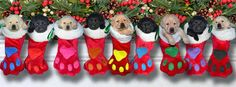 Christmas puppies                                                                                                                                                                                 More Facebook Cover Photo Maker, Free Facebook Cover Photos, Facebook Timeline Covers, Facebook Christmas Cover Photos, Winter Facebook Covers, Christmas Puppy, Christmas Animals, Christmas Time, Christmas Desktop