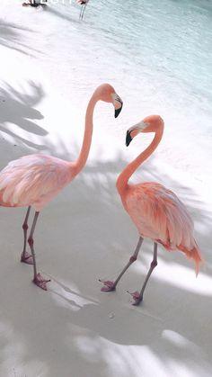 Flamingos on Beach wallpaper Flamingo Wallpaper, Ocean Wallpaper, Summer Wallpaper, Cute Wallpaper Backgrounds, Animal Wallpaper, Pink Wallpaper, Pretty Wallpapers, Aesthetic Iphone Wallpaper, Nature Wallpaper