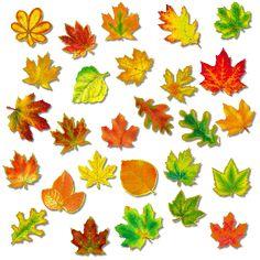 Картинки осенние листья для детей :: Карточки и картинки для детей