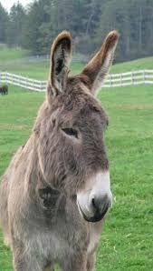 ONTARIO - Donkey sanctuary Guelph, ON