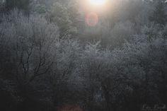 Sol Invictus - Welcome December!