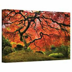 Add serene style to your dining room or master suite with this inspiring canvas print of a Japanese maple tree.   Product: Canvas printConstruction Material: CanvasFeatures:  Made in the USAReady to hang
