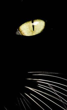 yellow eyes and white whiskers