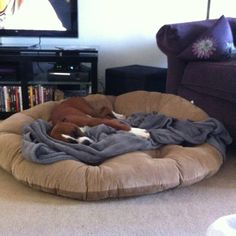 Get a nice BIG dog bed for cheap. Papasan cushion from pier one. He loves it.