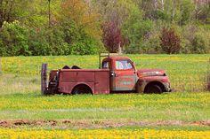 Field truck. Photography by Lynne King