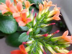 54/365 Natural, ca Aloe Vera. Cu DA NU: Au trecut 59 de zile din 2015. 59/365 Aloe Vera, Plants, Planters, Plant, Planting