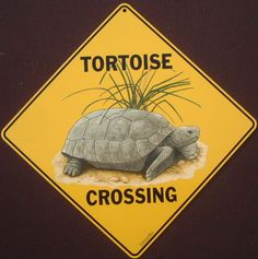 streetsignsplus.com images tortoise.JPG