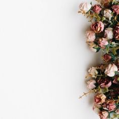Flowers over white background Free Photo White Background Quotes, Rose Background, Background Patterns, White Background Wallpaper, Backgrounds Free, Flower Backgrounds, Wallpaper Backgrounds, White Backgrounds, Rose Gold Wallpaper
