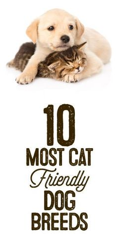 http://iheartdogs.com/the-10-most-cat-friendly-dog-breeds/