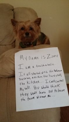 Dog Shame | My name is Zippy. I am a trashaholic. It all...