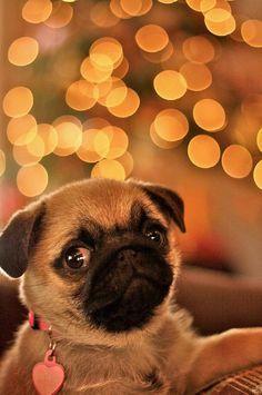Aren't I the cutest?!