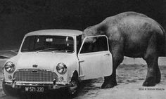 Mini & Elephant