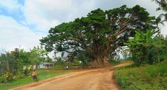 Driving to the Mount Yasur volcano in Tanna Island - Vanuatu