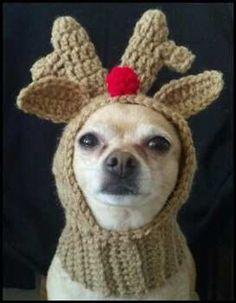 Pdf Crochet Pattern For Doggie Reindeer Hat For Small Breed Dogs - Amigurumi Crochet Dog Hat Free Pattern, Snood Pattern, Dog Sweater Pattern, Crochet Dog Sweater, Dog Pattern, Crochet Patterns, Crochet Hats, Dog Crochet, Free Crochet