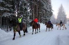 Horseback riding in Lapland Vuollerim Horseback Riding, Horse Riding, Scandinavian, Horses, Colors, Animals, Animais, Animales, Animaux