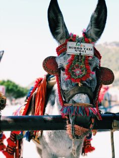 Burro taxi photo by Caleb Stokes (@yoitscalebb) on Unsplash