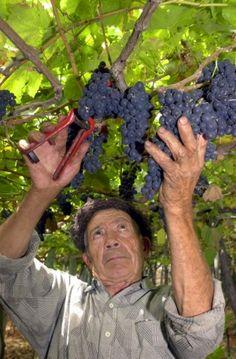 Madeira Wine Festival