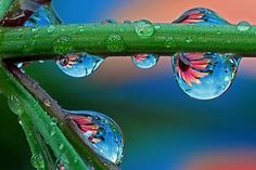 Steve Wall, Light Stalking water droplet photography