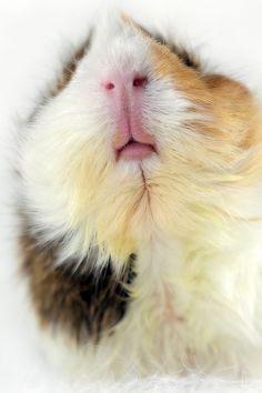 The Pigster! (by eltiodecharlotte)