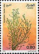 Medicinal plants Type TK