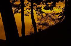 Churn Creek Sunset; Chesapeake Bay; Worton, Maryland, USA