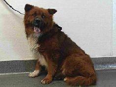 Downey CA: urgent Adopt or Rescue!   17-10653